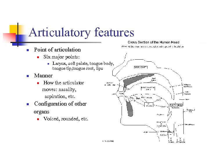 Articulatory features n Point of articulation n Six major points: n n Larynx, soft