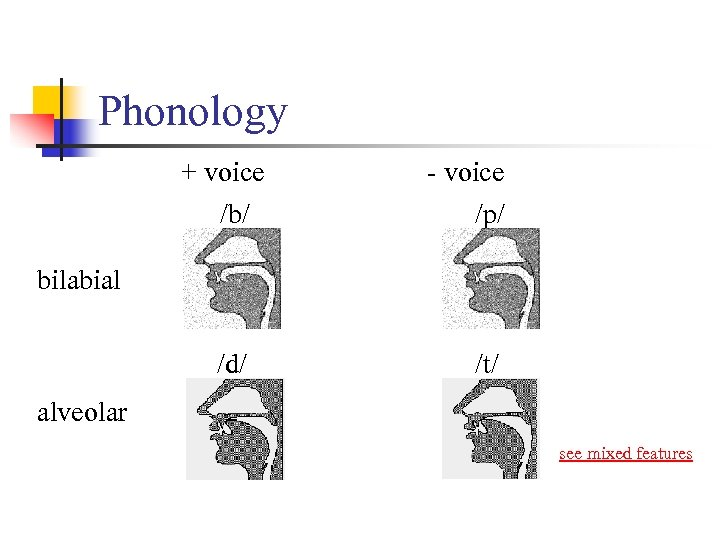 Phonology + voice /b/ - voice /p/ /d/ /t/ bilabial alveolar see mixed features