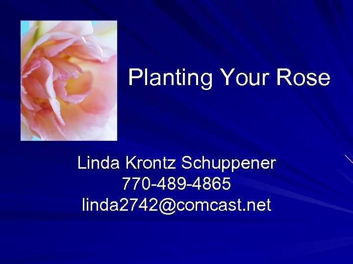Planting Your Rose Linda Krontz Schuppener 770 -489 -4865 linda 2742@comcast. net
