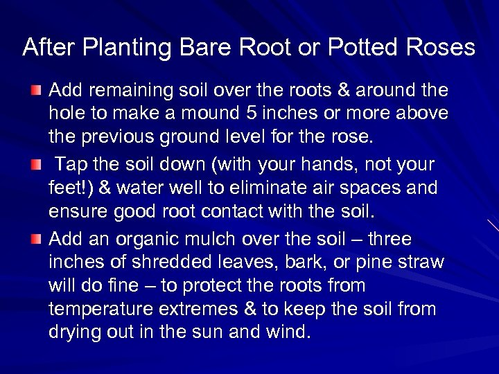 After Planting Bare Root or Potted Roses Add remaining soil over the roots &