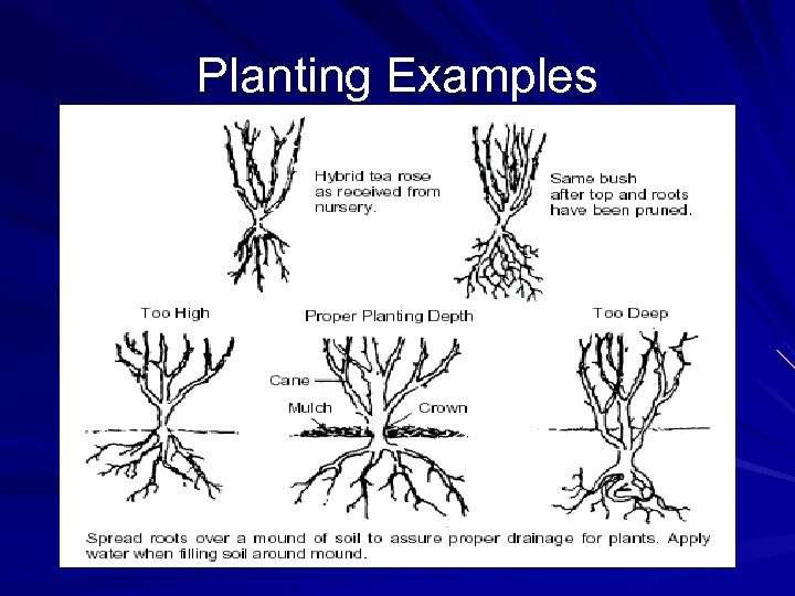 Planting Examples
