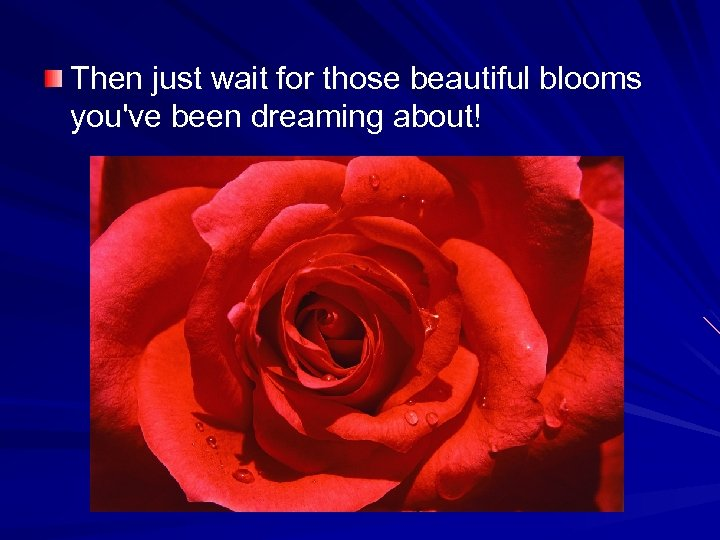 Then just wait for those beautiful blooms you've been dreaming about!