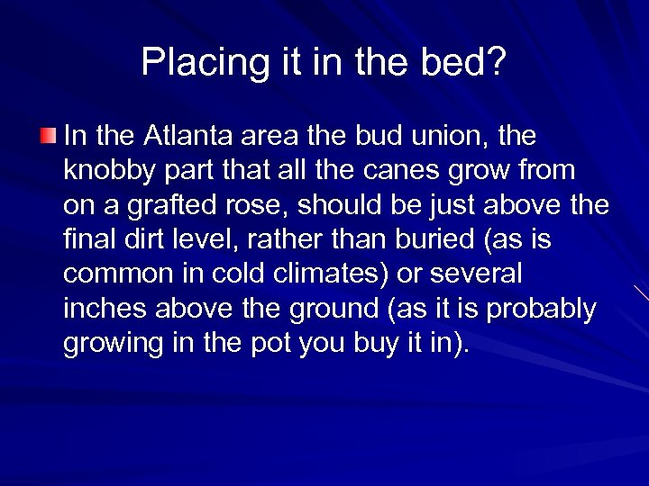 Placing it in the bed? In the Atlanta area the bud union, the knobby
