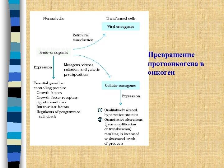 Превращение протоонкогена в онкоген