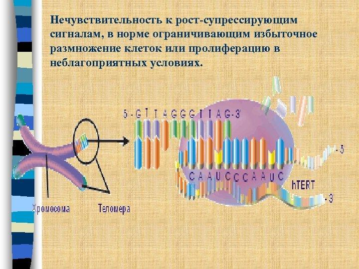 Нечувствительность к рост-супрессирующим сигналам, в норме ограничивающим избыточное размножение клеток или пролиферацию в неблагоприятных