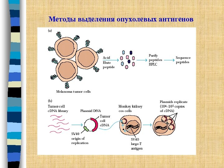 Методы выделения опухолевых антигенов