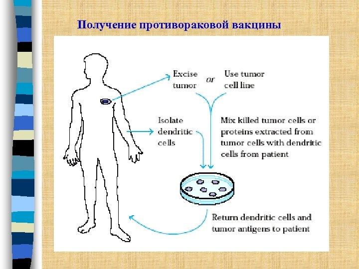 Получение противораковой вакцины