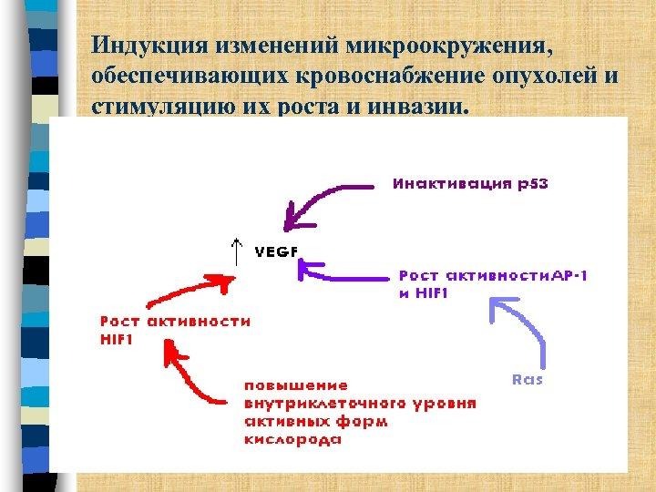 Индукция изменений микроокружения, обеспечивающих кровоснабжение опухолей и стимуляцию их роста и инвазии.