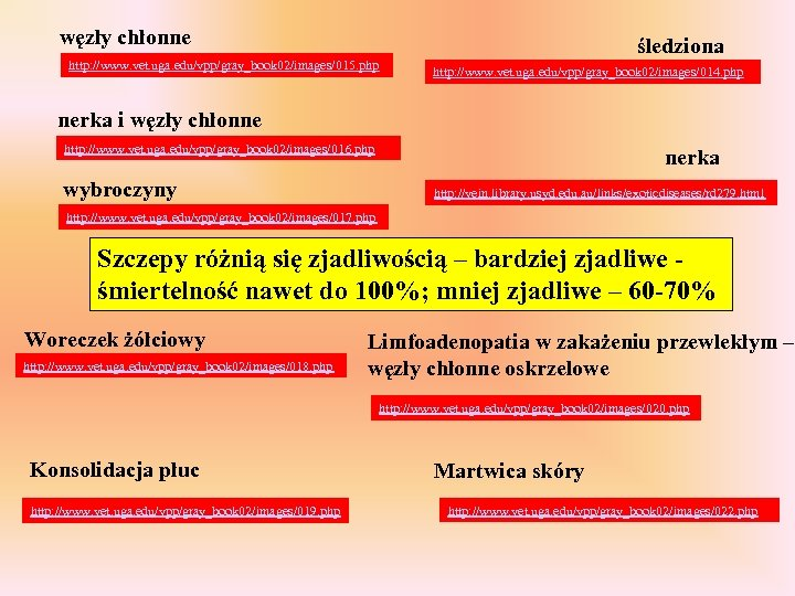 węzły chłonne śledziona http: //www. vet. uga. edu/vpp/gray_book 02/images/015. php http: //www. vet. uga.