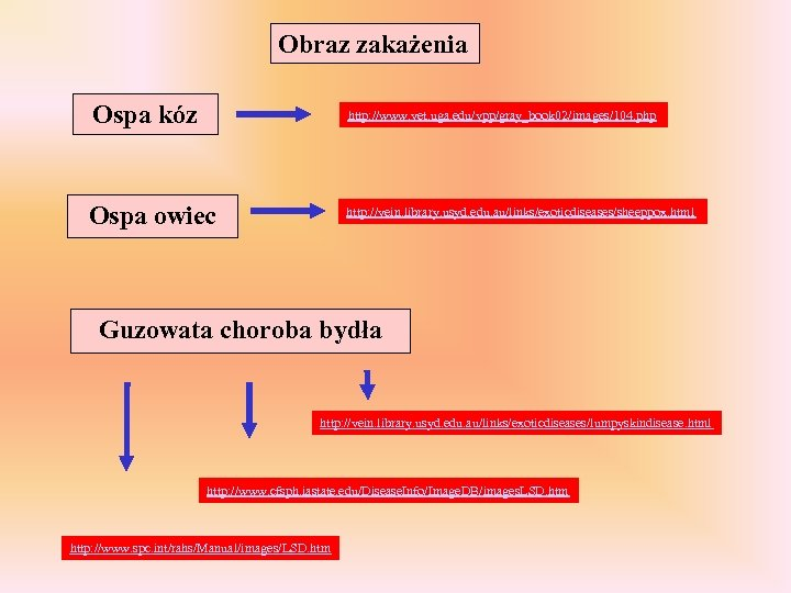 Obraz zakażenia Ospa kóz http: //www. vet. uga. edu/vpp/gray_book 02/images/104. php Ospa owiec http: