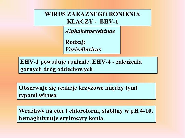 WIRUS ZAKAŹNEGO RONIENIA KLACZY - EHV-1 Alphaherpesvirinae Rodzaj: Varicellovirus EHV-1 powoduje ronienie, EHV-4 -