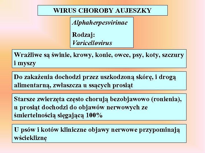 WIRUS CHOROBY AUJESZKY Alphaherpesvirinae Rodzaj: Varicellovirus Wrażliwe są świnie, krowy, konie, owce, psy, koty,