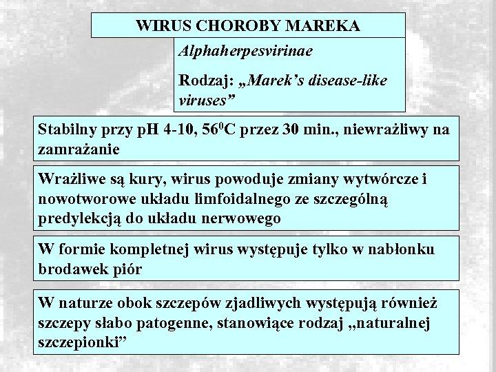 "WIRUS CHOROBY MAREKA Alphaherpesvirinae Rodzaj: ""Marek's disease-like viruses"" Stabilny przy p. H 4 -10,"