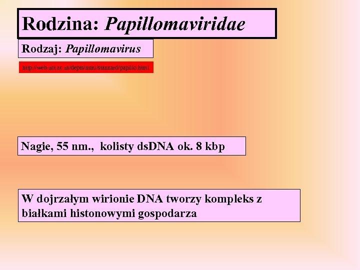 Rodzina: Papillomaviridae Rodzaj: Papillomavirus http: //web. uct. ac. za/depts/mmi/stannard/papillo. html Nagie, 55 nm. ,