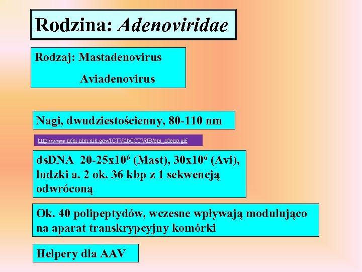Rodzina: Adenoviridae Rodzaj: Mastadenovirus Aviadenovirus Nagi, dwudziestościenny, 80 -110 nm http: //www. ncbi. nlm.