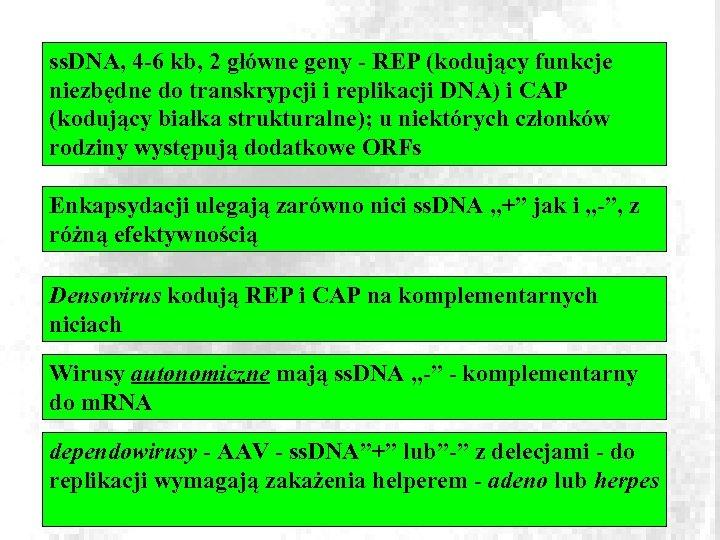 ss. DNA, 4 -6 kb, 2 główne geny - REP (kodujący funkcje niezbędne do