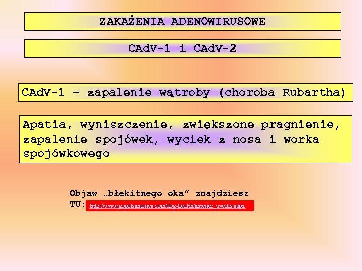 ZAKAŻENIA ADENOWIRUSOWE CAd. V-1 i CAd. V-2 CAd. V-1 – zapalenie wątroby (choroba Rubartha)