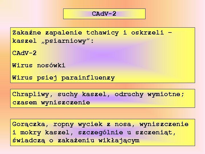 """CAd. V-2 Zakaźne zapalenie tchawicy i oskrzeli – kaszel """"psiarniowy"""": CAd. V-2 Wirus nosówki"""