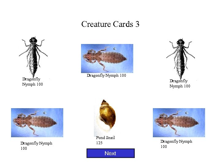 Creature Cards 3 Dragonfly Nymph 100 Pond Snail 125 Next Dragonfly Nymph 100