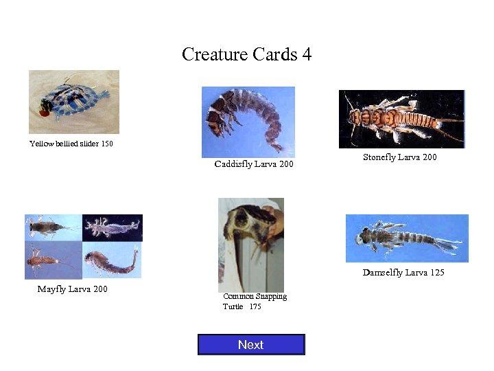 Creature Cards 4 Yellow bellied slider 150 Caddisfly Larva 200 Stonefly Larva 200 Damselfly
