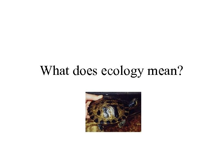 What does ecology mean?