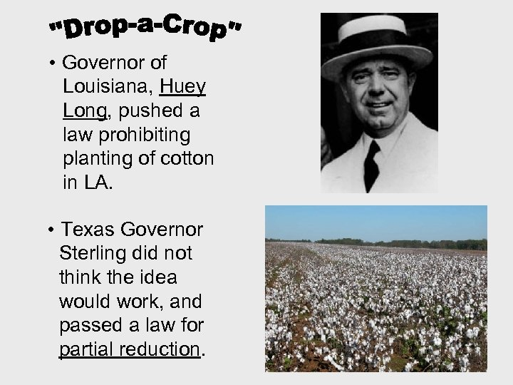 • Governor of Louisiana, Huey Long, pushed a law prohibiting planting of cotton