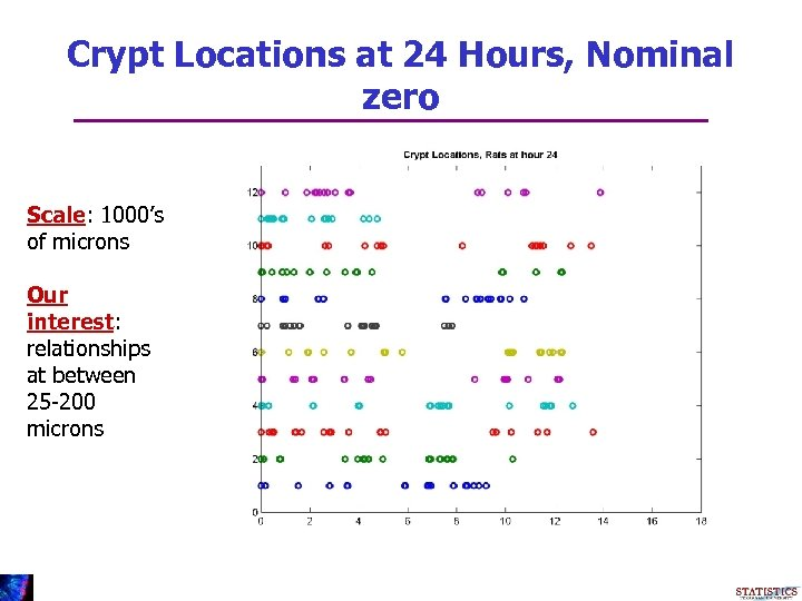 Crypt Locations at 24 Hours, Nominal zero Scale: 1000's of microns Our interest: relationships