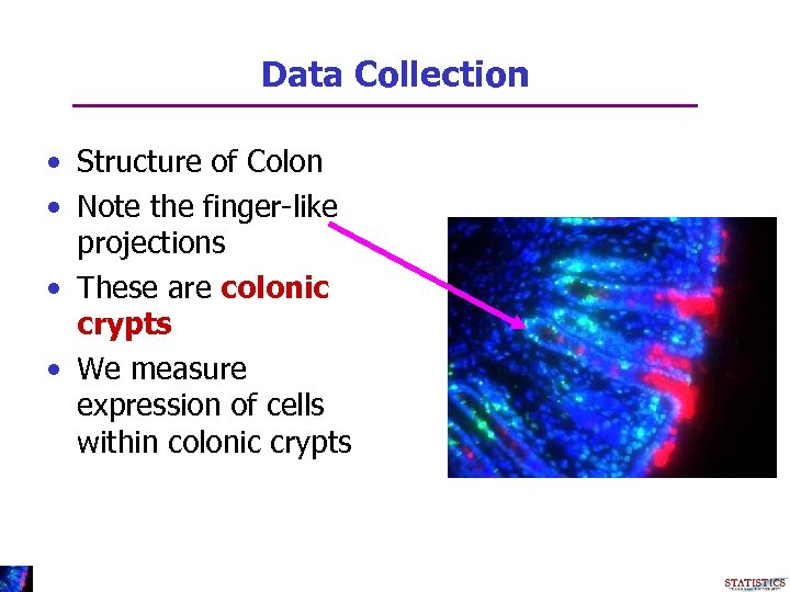 Data Collection • Structure of Colon • Note the finger-like projections • These are