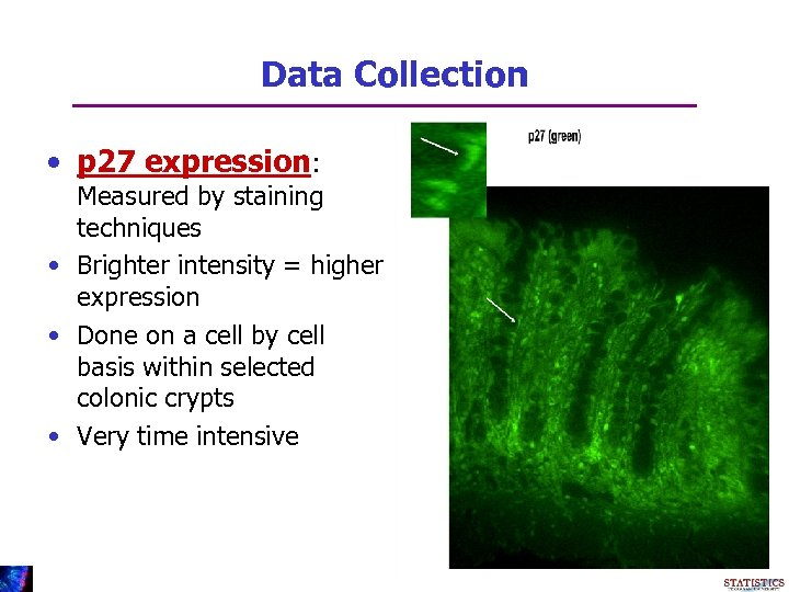 Data Collection • p 27 expression: Measured by staining techniques • Brighter intensity =