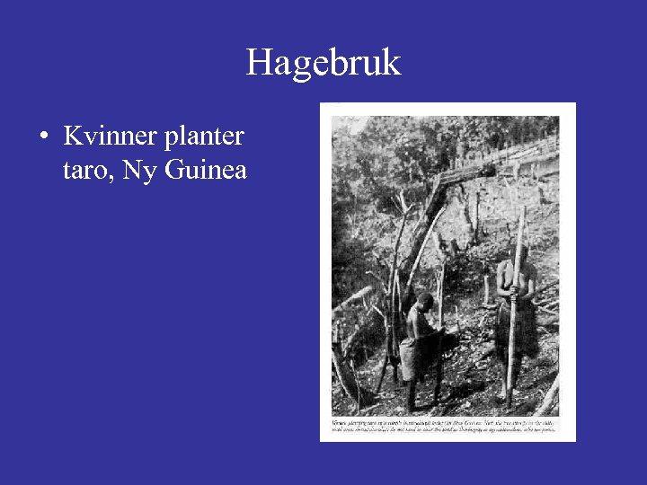 Hagebruk • Kvinner planter taro, Ny Guinea