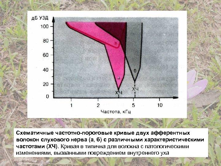 Схематичные частотно-пороговые кривые двух афферентных волокон слухового нерва (а, б) с различными характеристическими частотами