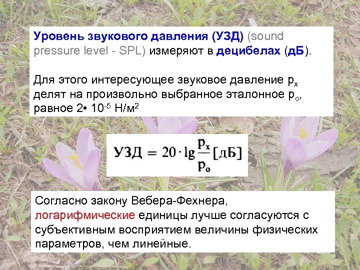 Уровень звукового давления (УЗД) (sound pressure level - SPL) измеряют в децибелах (д. Б).