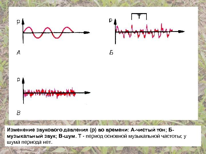 Изменение звукового давления (р) во времени: А-чистый тон; Бмузыкальный звук; В-шум. Т - период