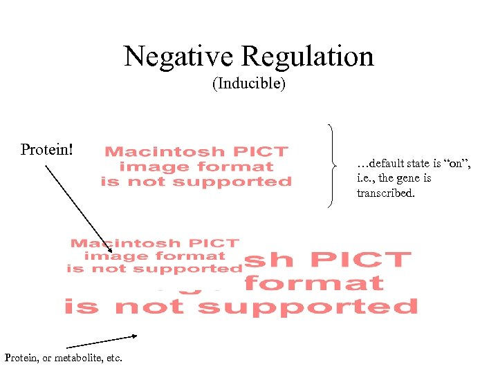 "Negative Regulation (Inducible) Protein! Protein, or metabolite, etc. …default state is ""on"", i. e."