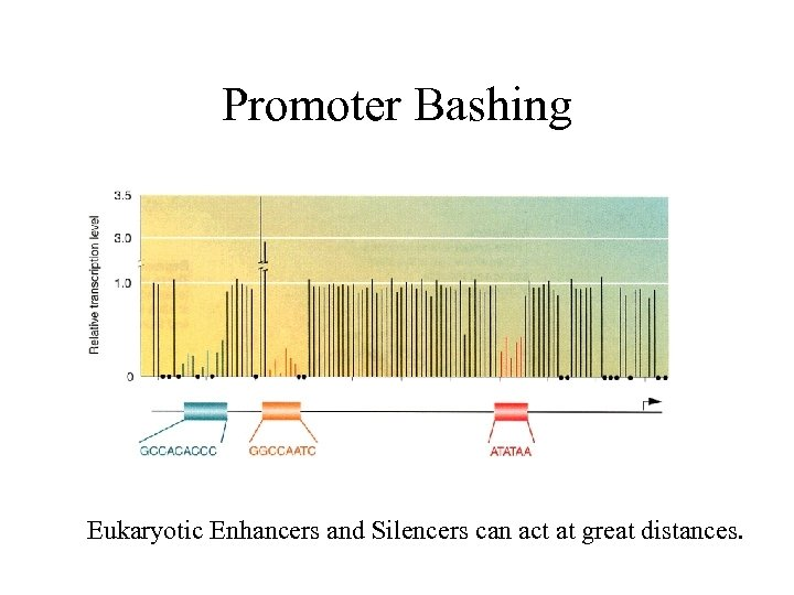 Promoter Bashing Eukaryotic Enhancers and Silencers can act at great distances.