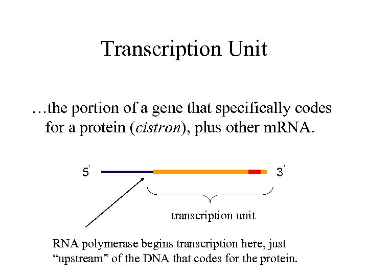 Transcription Unit …the portion of a gene that specifically codes for a protein (cistron),