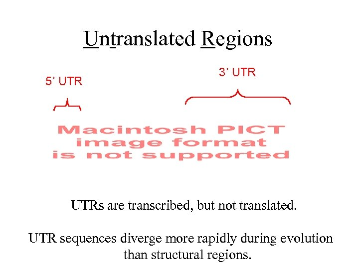 Untranslated Regions 5' UTR 3' UTRs are transcribed, but not translated. UTR sequences diverge