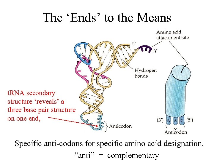 The 'Ends' to the Means t. RNA secondary structure 'reveals' a three base pair