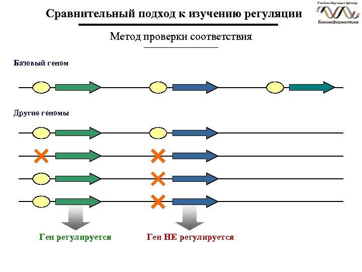 Сравнительный подход к изучению регуляции Метод проверки соответствия Базовый геном Другие геномы Ген регулируется