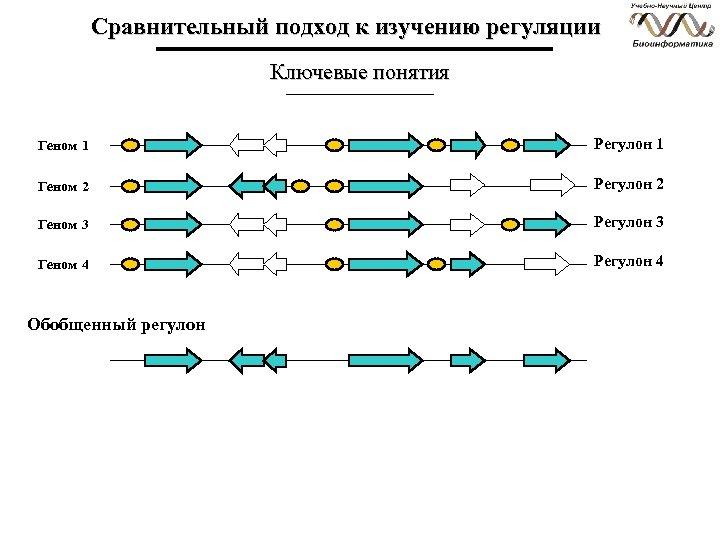 Сравнительный подход к изучению регуляции Ключевые понятия Геном 1 Регулон 1 Геном 2 Регулон