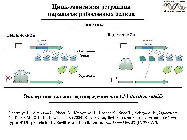 Цинк-зависимая регуляция паралогов рибосомных белков Гипотеза Недостаток Zn Достаточно Zn Рибосомные белки Ферменты Экспериментальное