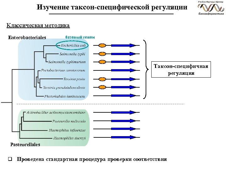 Изучение таксон-специфической регуляции Классическая методика Enterobacteriales базовый геном Таксон-специфичная регуляция Pasteurellales q Проведена стандартная