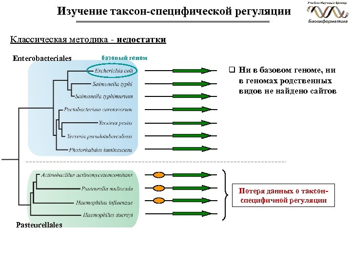 Изучение таксон-специфической регуляции Классическая методика - недостатки Enterobacteriales базовый геном q Ни в базовом