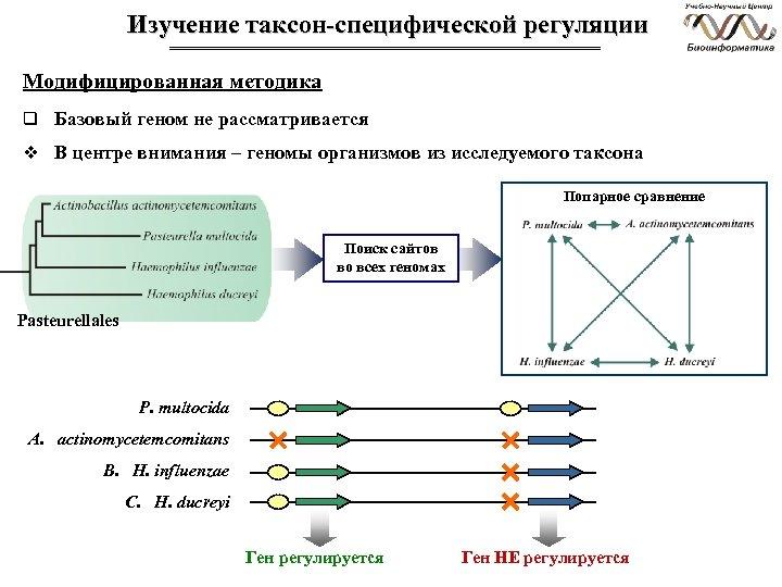 Изучение таксон-специфической регуляции Модифицированная методика q Базовый геном не рассматривается v В центре внимания