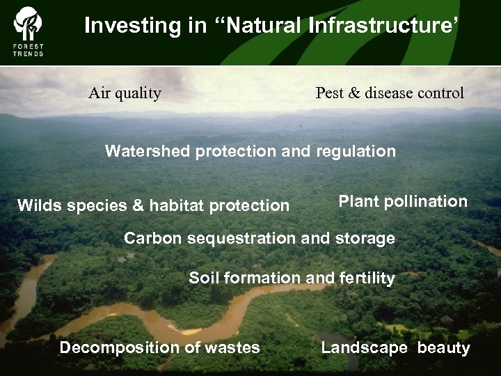 """Investing in """"Natural Infrastructure' Air quality Pest & disease control The Forest Climate Alliance"""