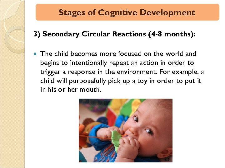 Stages of Cognitive Development 3) Secondary Circular Reactions (4 -8 months): The child becomes