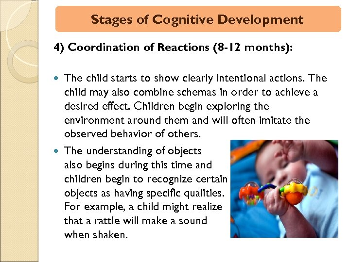 Stages of Cognitive Development 4) Coordination of Reactions (8 -12 months): The child starts
