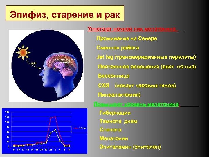 Эпифиз, старение и рак Угнетают ночной пик мелатонина: Проживание на Севере Сменная работа Jet