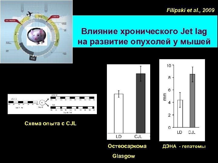 Filipski et al. , 2009 Влияние хронического Jet lag на развитие опухолей у мышей