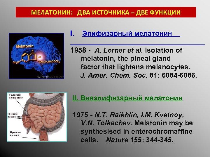 МЕЛАТОНИН: ДВА ИСТОЧНИКА – ДВЕ ФУНКЦИИ I. Эпифизарный мелатонин 1958 - A. Lerner et